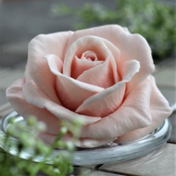 Роза Виктория
