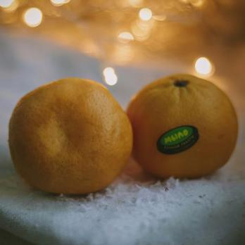 Наклейки на мандарины, 13 шт.